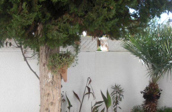 VILLA ADORA – SIDI MAHRSI ( louée)